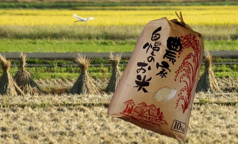 奥信濃の肥沃な土壌で育まれた「中野天領米5Kg」 (送料込み)