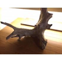 海からの贈り物 流木 幹