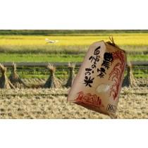 奥信濃の肥沃な土壌で育まれた「中野天領米お徳用10Kg」 (送料込み)